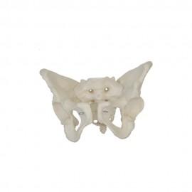860 Model budowy czaszki