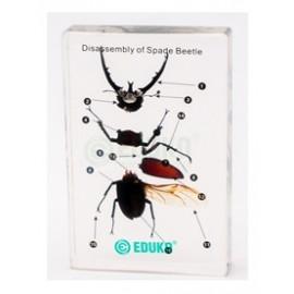 2475 Budowa owada Chrząszcz