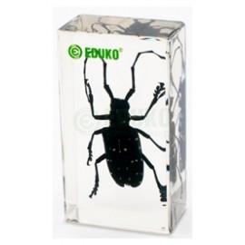 2480 Kózka - chrząszcz