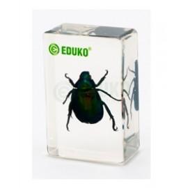2482 Listnik - chrząszcz