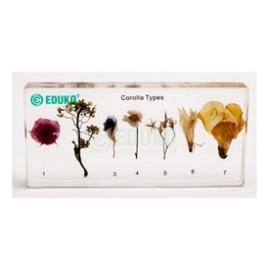 2498 Zestaw kwiatów w pleksie