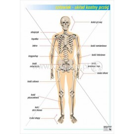 01 Układ kostny - przód