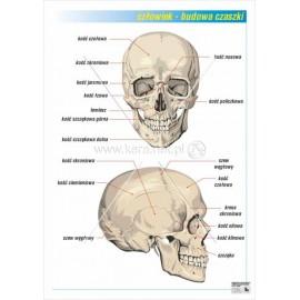 02 Budowa czaszki