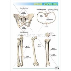07 Wybrane kości