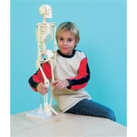 2723 Szkielet człowieka 80cm na podstawie