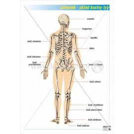 011 Układ kostny tył