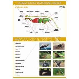 031 Anatomia ssaków