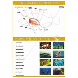 032 Anatomia ryb