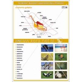 035 Anatomia ptaków