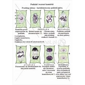 046 Podział i wzrost komórki