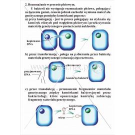 052 Rozmnażanie bakterii cz.2