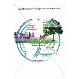 053 Udział bakterii w obiegu azotu w przyrodzie