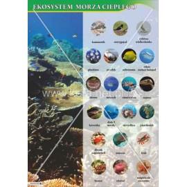 118 Ekosystem morza ciepłego
