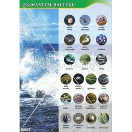 119 Ekosystem Bałytku