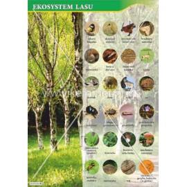 120 Ekosystem lasu