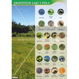 122 Ekosystem łąki i pola