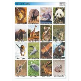 362 Dzikie zwierzęta