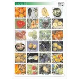 402 Owoce