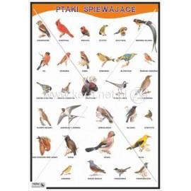 610 Ptaki śpiewające
