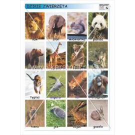627 Dzikie zwierzęta