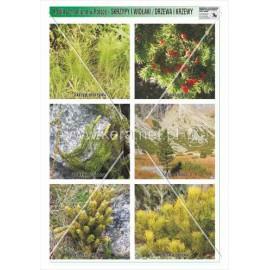 651 Skrzypy i widłaki / drzewa i krzewy