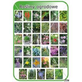 652 Rośliny ogrodowe