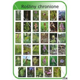 655 Rośliny chronione cz.2