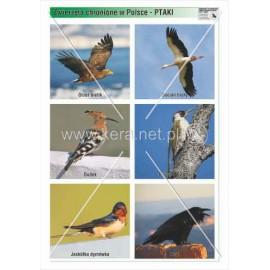 759 Ptaki cz. 1