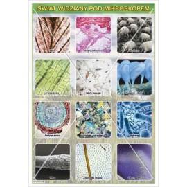 161 Świat widziany pod mikroskopem cz. 1