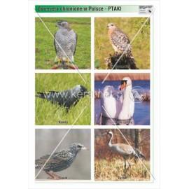 760 Ptaki cz. 2