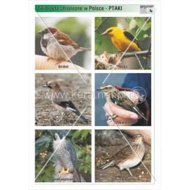 762 Ptaki cz. 4