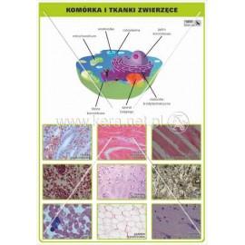 927 Komórka zwierzęca, tkanki zwierzęce