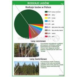 1671 Rodzaje lasów cz. 1