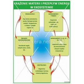 1675 Krążenie materii i przepływ energii w ekosystemie