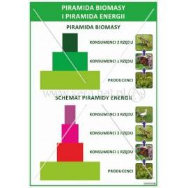 1685 Piramida biomasy i piramida energii