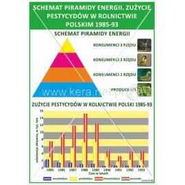 1686 Schemat piramidy energii. Zużycie pestycydów w rolnictwie Polski 1985-93