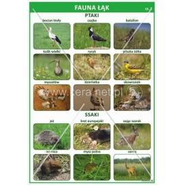 1687 Fauna łąk cz. 1