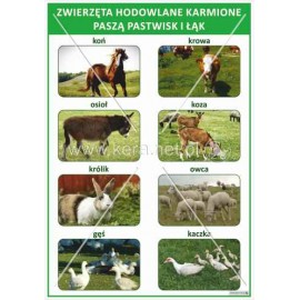 1690 Zwierzęta hodowlane karmione paszą pastwisk i łąk