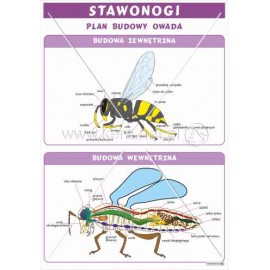 1742 Plan budowy owada