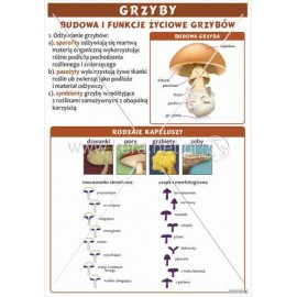 1809 Budowa i funkcje życiowe grzybów