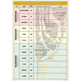 1518 Drzewo genealogiczne kręgowców