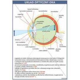 2108 Układ optyczny oka
