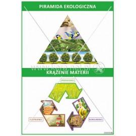 2301 Piramida ekologiczna, krążenie materii