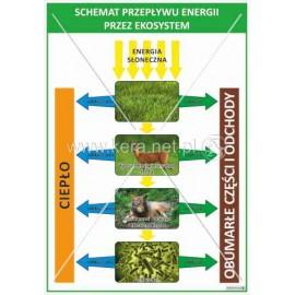 2363. Schemat przepływu energii przez ekosystem
