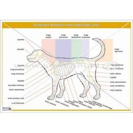 2441 Schemat budowy anatomicznej psa