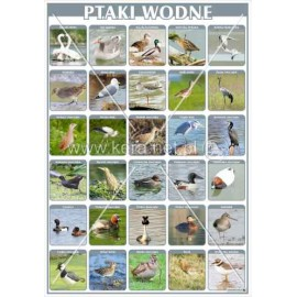 2451 Ptaki wodne
