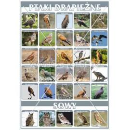 2452 Ptaki drapieżna i sowy