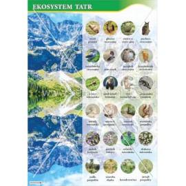 2467 Ekosystem Tatr