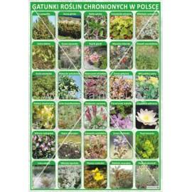 2468 Gatunki roślin chronionych w Polsce