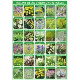 2469 Rośliny zielne chronione w Polsce